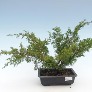 Outdoor bonsai - Juniperus chinensis Itoigawa-Chinese juniper VB2019-261001