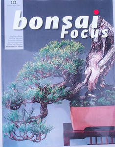Bonsai focus - Dutch No.121