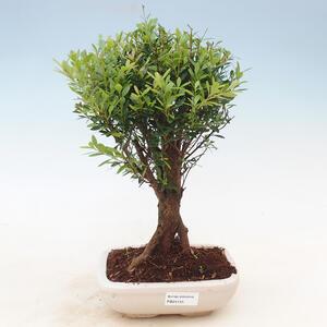 Outdoor bonsai -House VB13611