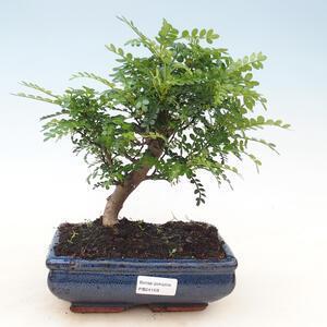 Outdoor bonsai - Rhododendron Shin Nikko - Azalea pink