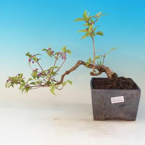 Outdoor bonsai - beautiful Callicarpa