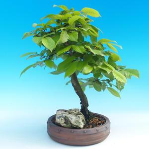 Outdoor bonsai -Habr common