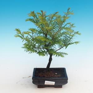 Outdoor bonsai - Two-line bream
