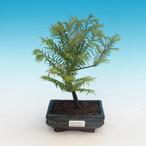 Outdoor bonsai - Two-line bream