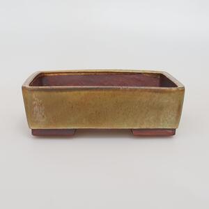 Outdoor bonsai - Maple Buergerianum - Burger Maple VB2019-26721