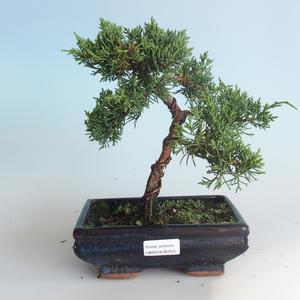 Outdoor bonsai - Juniperus chinensis - Chinese juniper 408-VB2019-26743