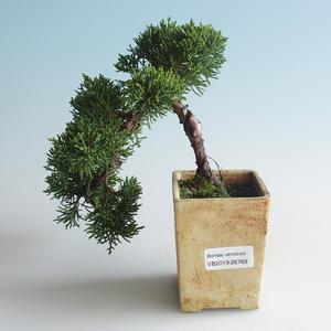 Outdoor bonsai - Juniperus chinensis - Chinese juniper 408-VB2019-26769