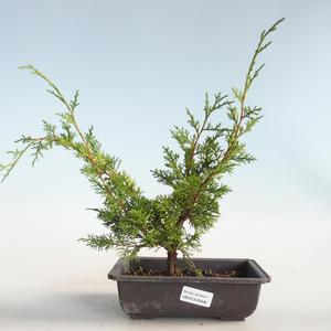 Outdoor bonsai - Juniperus chinensis Itoigava-Chinese juniper VB2019-26896