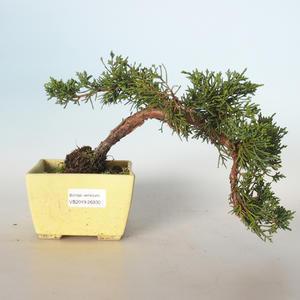 Outdoor bonsai - Juniperus chinensis - Chinese juniper VB-26930