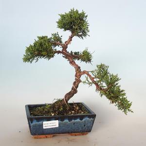 Outdoor bonsai - Juniperus chinensis - Chinese juniper VB-26942