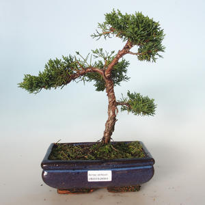 Outdoor bonsai - Juniperus chinensis - Chinese juniper VB-26944