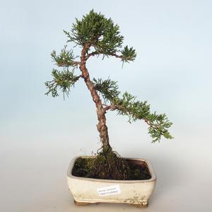 Outdoor bonsai - Juniperus chinensis - Chinese juniper VB-26950