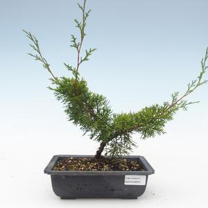 Outdoor bonsai - Juniperus chinensis Itoigawa-Chinese juniper VB2019-26975