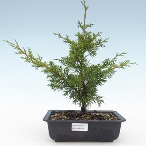 Outdoor bonsai - Juniperus chinensis Itoigawa-Chinese juniper VB2019-26977