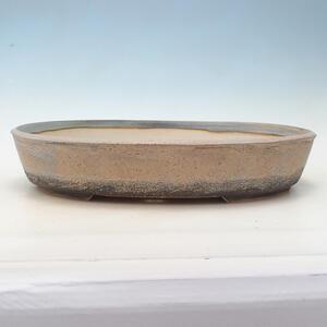 Kokedama v keramice -Sagerecia čajová - Sageretia thea