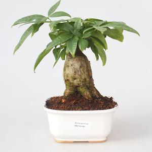Room bonsai - Pachira water