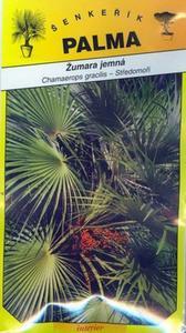 Zumar fine - Chamaerops gracilis