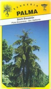 Brewer Spruce - Picea Breweriana