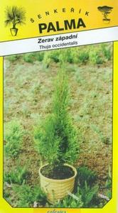 Thuja occidentalis Western -thuja