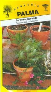 Paprsčitá Pine - Pinus radiata