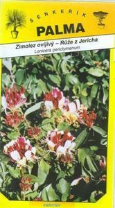 Lonicera periclymenum (rose of Jericho) - Lonicera Peric