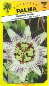 Passion cerulean blue -Passiflora