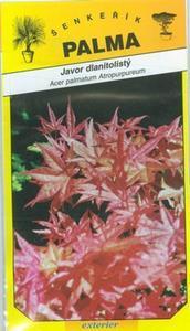 Japanese Maple - Acer palmatum Atropurpureum