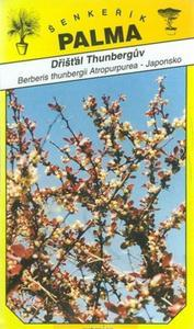 Berberis thunbergii - Berberis thunbergii At.