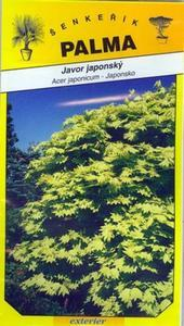 Japanese maple - Acer japonicum