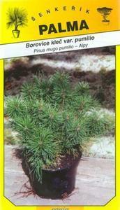 Pine klečvar. mugo pumilio -Pinus pumiilio