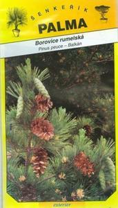 Pinus peuce - Balkans
