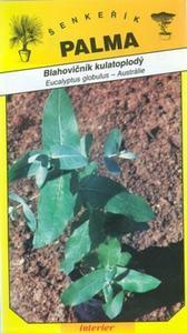 Eucalyptus globulus - Eucaliptus globulus