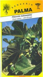 Anatolian fig tree - Ficus carica