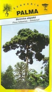 Alepská Pine - Pinus halepensis