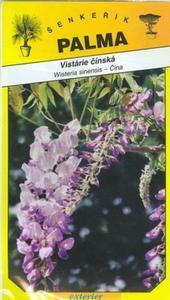 Chinese wisteria - Wisteria sinensis