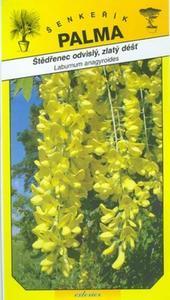 Laburnum anagyroides, golden rain - Laburnum anagyroid