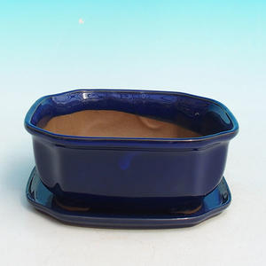 bonsai bowl and tray of water H 31, blue