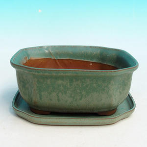 bonsai bowl and tray of water H 31, green