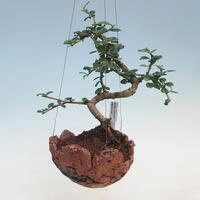 Kokedamy - mossy, in ceramics