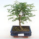 Ceramic bonsai bowl 23 x 18 x 6 cm, brown-gray color - 1/3