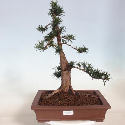 Ceramic bonsai bowl 14.5 x 14.5 x 5.5 cm, cracked color - 1