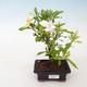 Ceramic bonsai bowl - 1/3
