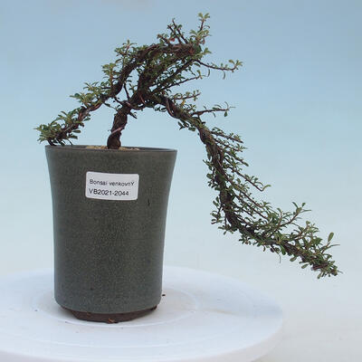 Ceramic bonsai bowl - 17 x 17 x 7 cm, color green - 1