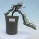 Ceramic bonsai bowl - 17 x 17 x 7 cm, color green - 1/2