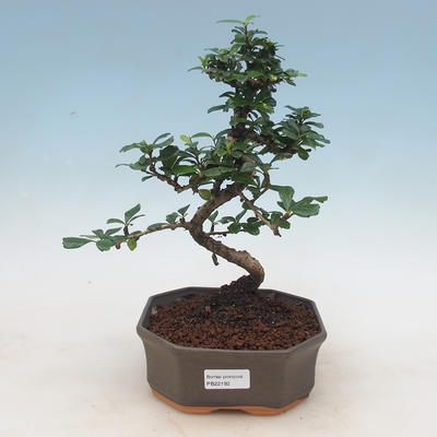 Ceramic bonsai bowl 15 x 11 x 5.5 cm, brown-blue color - 2nd quality - 1