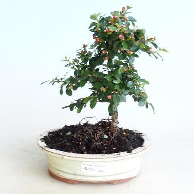 Ceramic bonsai bowl 10 x 8 x 2.5 cm, color green - 2nd quality - 1