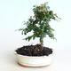 Ceramic bonsai bowl 10 x 8 x 2.5 cm, color green - 2nd quality - 1/4