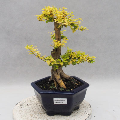 Ceramic bonsai bowl 22,5 x 22,5 x 22 cm brown-green color - 1