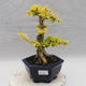 Ceramic bonsai bowl 22,5 x 22,5 x 22 cm brown-green color - 1/3