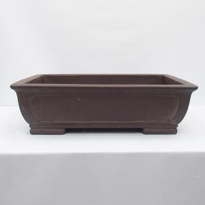 Outdoor bonsai -Malus Halliana - fruited apple - 1